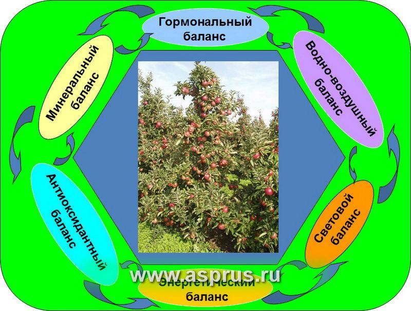 биохим, защита растений, качество плодов, купить, обрезка, периодичность плодоношения, подвой, полив, реализация, регуляторы роста, сад, сорт,