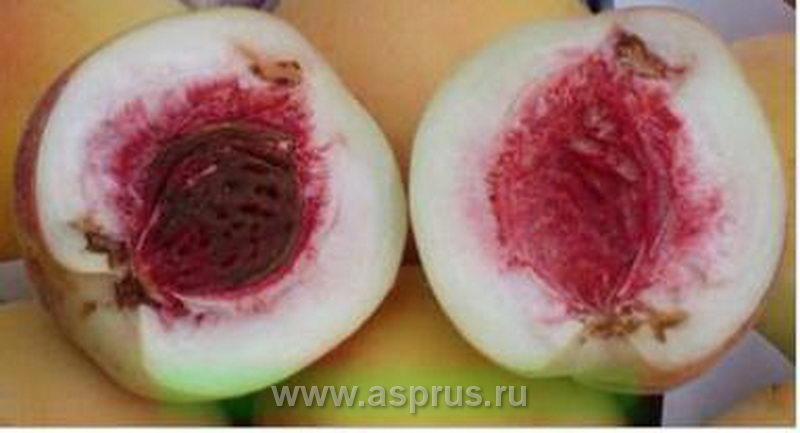 Восточная плодожорка