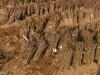 Фото 2. Клоновые подвои Р 60 в прикопе