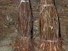 Фото 8. Клоновые подвои для персика