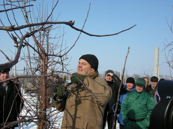АCH. RIJCKAERT показывает зимняю обрезку деревьев