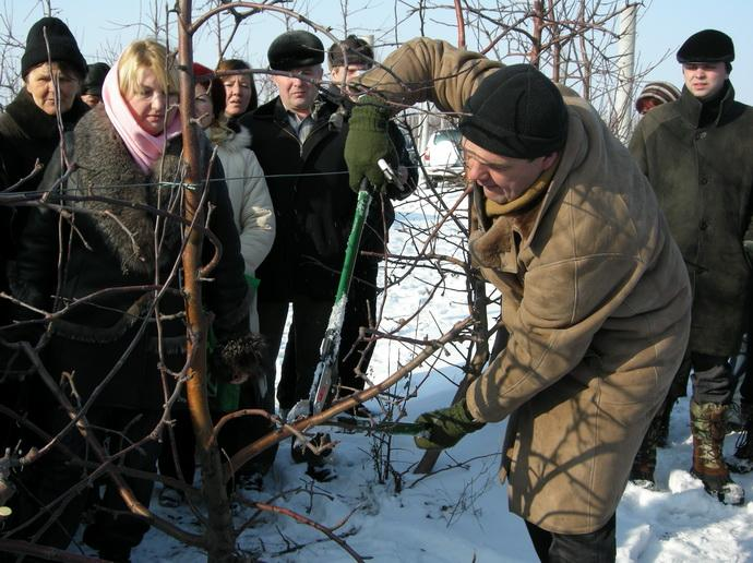 CH. RIJCKAERT показывает зимняю обрезку деревьев