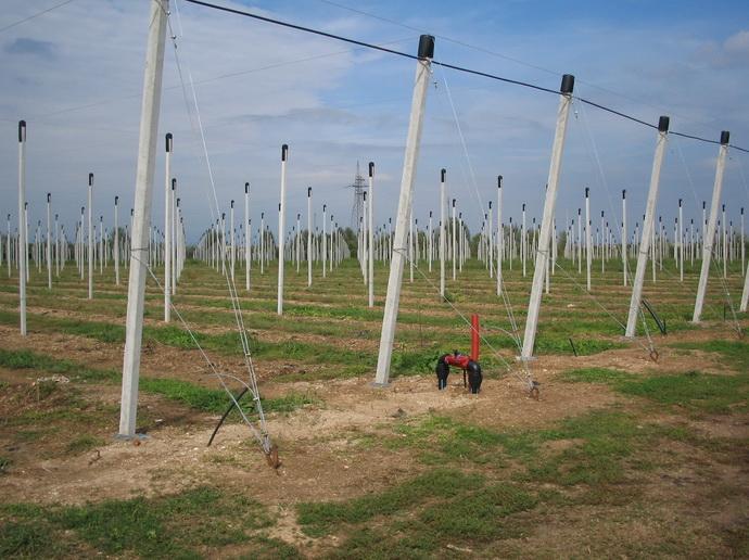 Опорные конструкции для посадки интенсивного сада с противоградовой защиты