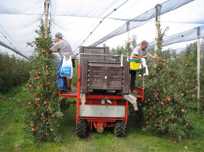 Самоходный комбайн для уборки урожая в интенсивном саду