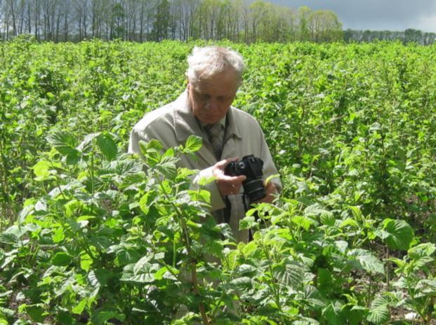 Доктор ЯН ДАНЕК (Польша, Исследовательский Институт Садоводства и цветоводства, г.Brzezna)