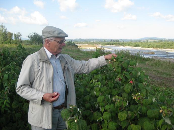Доктор ЯН ДАНЕК (Польша, Исследовательский Институт Садоводства и цветоводства, г.Brzezna) демонстрирует малину