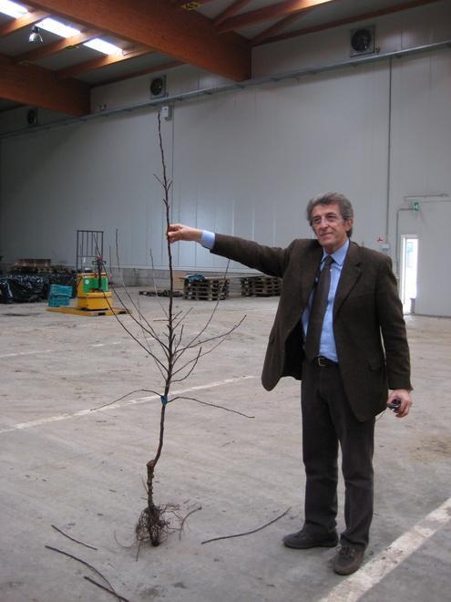 Dr. Giovanni Zanzi, главный агроном ПЛОДОВОГО ПИТОМНИКА «VIVAI F.Iii ZANZI» демонстрирует высококачественный саженец яблони