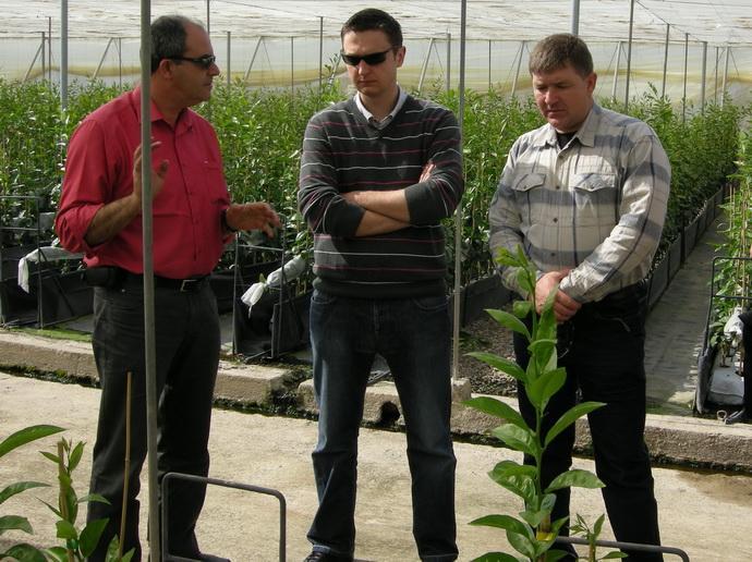 Выращивание цитрусовых культур в защищенном грунте