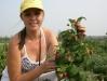 Фото 1. Ведущий специалист по ягодным культурам АСП-РУС Жбанова О.В. демонстрирует сорт Полька