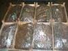 Посадочный материал земляники в ящиках