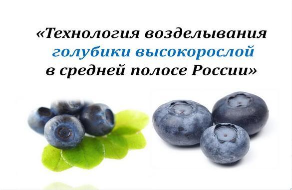 Технология возделывания голубики высокорослой в средней полосе России