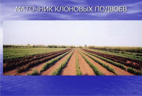2_1.jpg