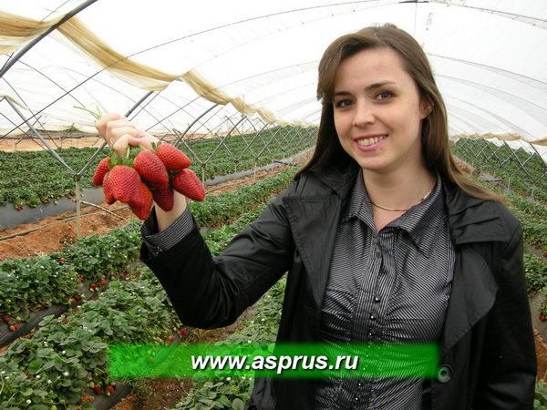 Жбанова Ольга Владимировна демонстрирует сорт Сан-Андеас