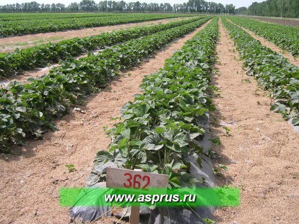 агрофирма Сад-Гигант