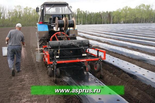 Рис.2 - Гребнеобразователь В-9 с пленкоукладчиком подготавливает почву для посадки рассады земляники