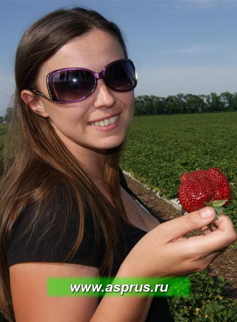 Ведущий специалист ассоциации Жбанова Ольга Владимировна демонстрирует первую ягоду сорта Мармелада