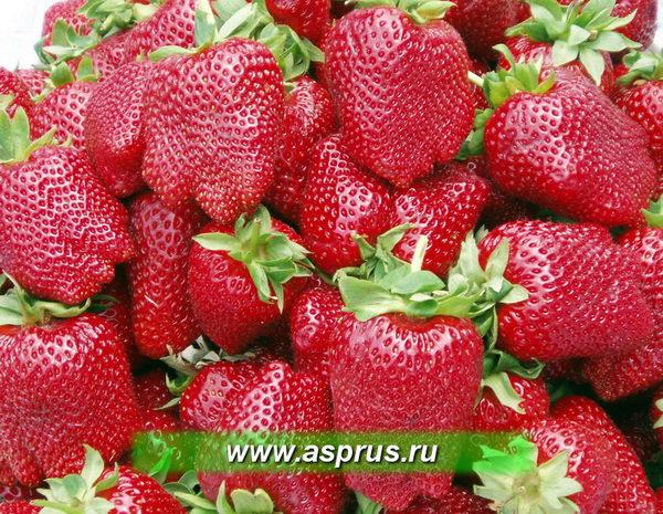 """Качество ягоды сорта """"АРОЗА"""""""