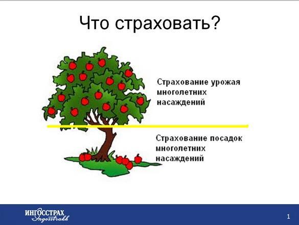 strahovanie_sadov_pr_02_1