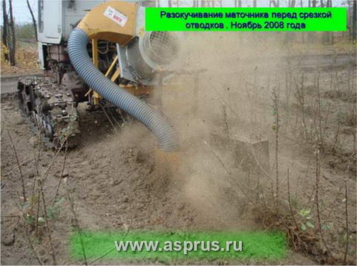Разокучивание маточника перед срезкой отводков . Ноябрь 2008 года
