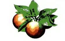 защита сада, защита яблони, ооо ландшафт, праля и.и., система защиты сада, система защиты яблони, фунгициды для сада