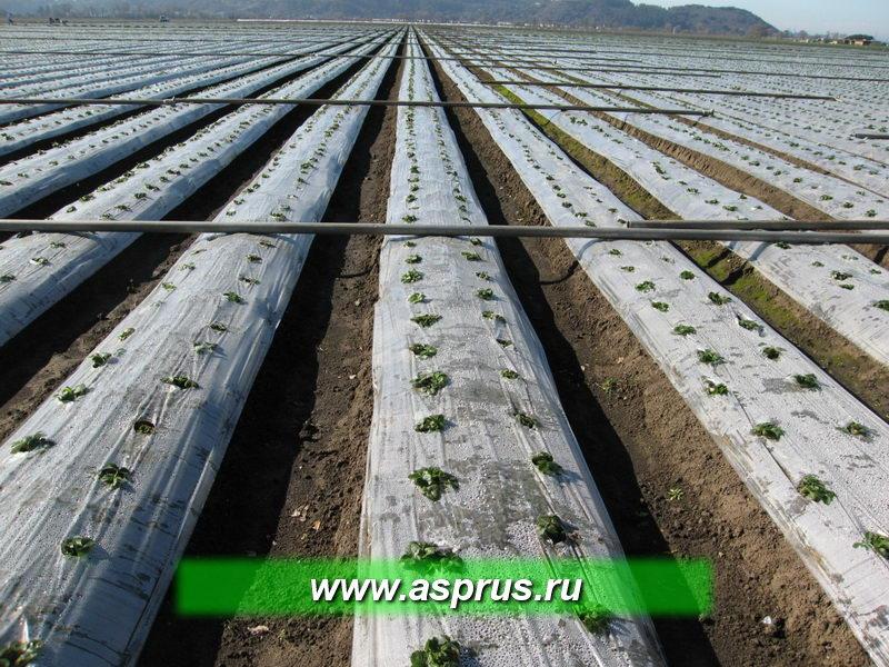 Интегрированная система производства земляники