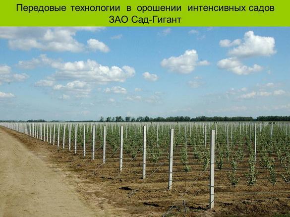 tehnologii_poliva_sad-gigant_2012_01