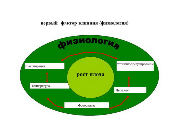 tehnologii_poliva_sad-gigant_2012_26