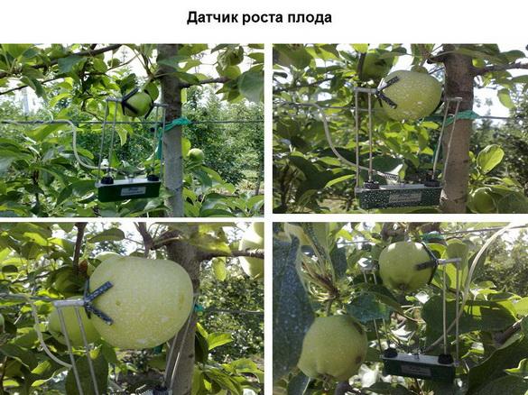 tehnologii_poliva_sad-gigant_2012_30