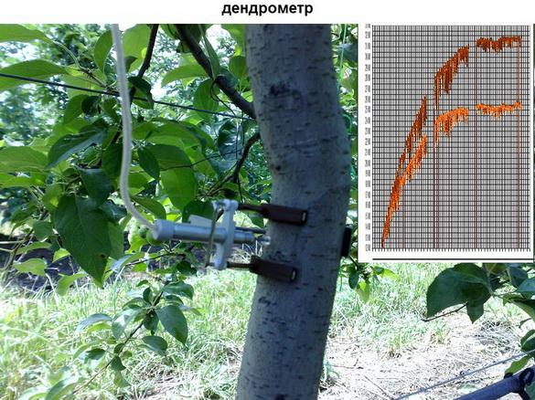 tehnologii_poliva_sad-gigant_2012_34