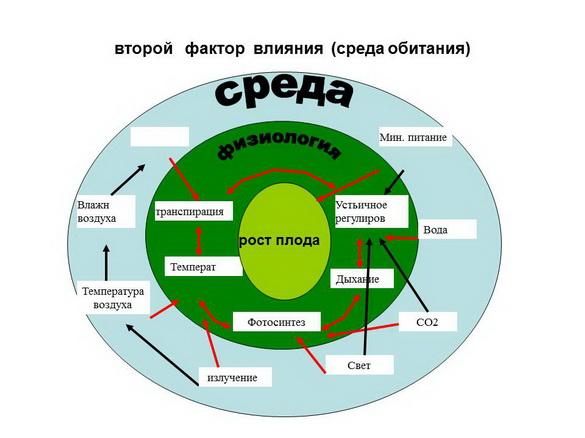 tehnologii_poliva_sad-gigant_2012_39