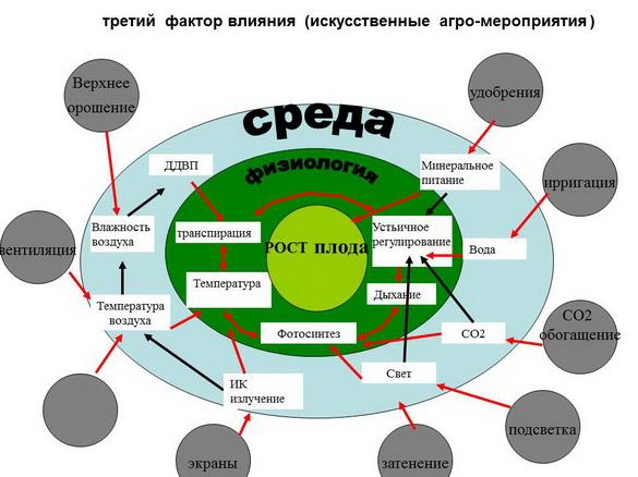 tehnologii_poliva_sad-gigant_2012_46