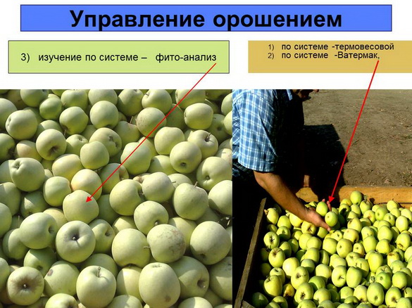 tehnologii_poliva_sad-gigant_2012_47