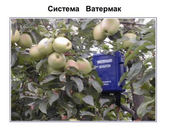 tehnologii_poliva_sad-gigant_2012_50