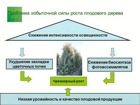 tehnologiya_sada_sad-gigant_pr_2012_02