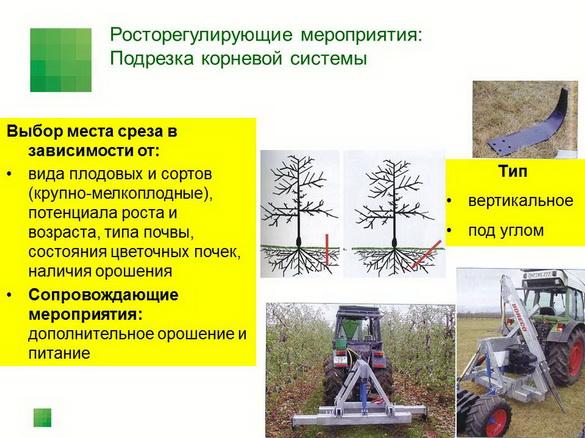 tehnologiya_sada_sad-gigant_pr_2012_03