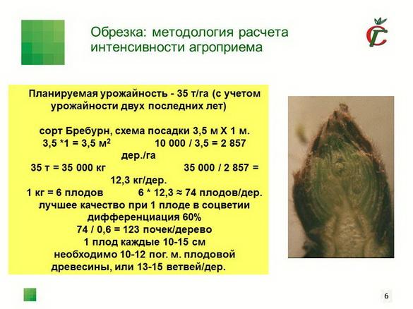 tehnologiya_sada_sad-gigant_pr_2012_05