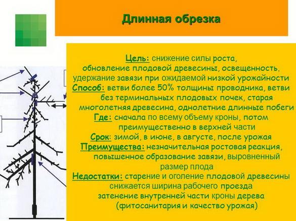 tehnologiya_sada_sad-gigant_pr_2012_09