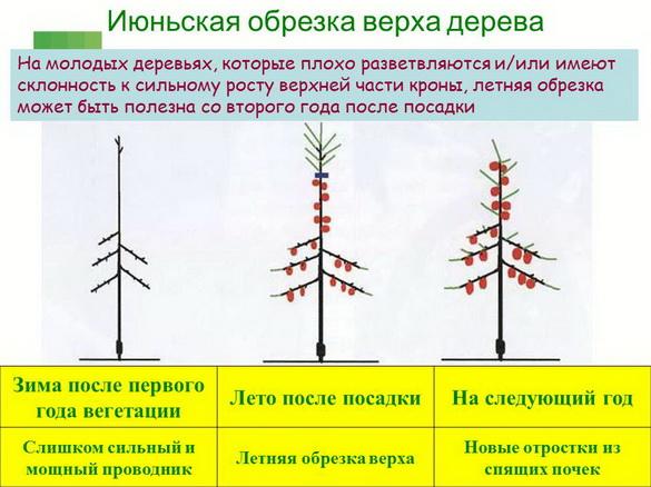 tehnologiya_sada_sad-gigant_pr_2012_10