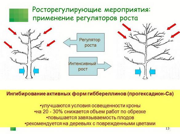 tehnologiya_sada_sad-gigant_pr_2012_12