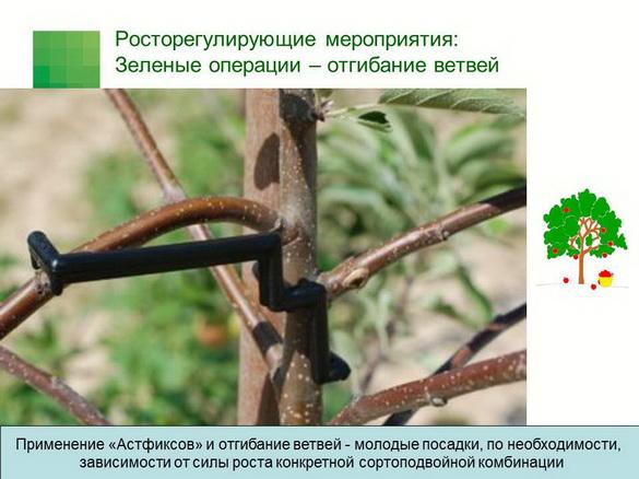tehnologiya_sada_sad-gigant_pr_2012_13