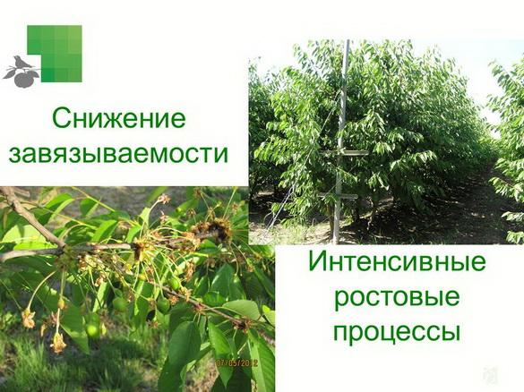 tehnologiya_sada_sad-gigant_pr_2012_19