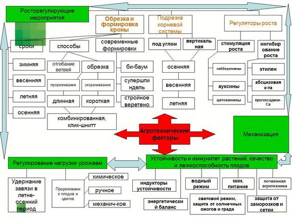 tehnologiya_sada_sad-gigant_pr_2012_20
