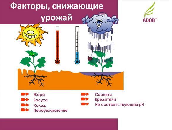 adob_rus_pr_05_1