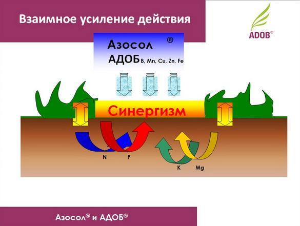adob_rus_pr_06_1