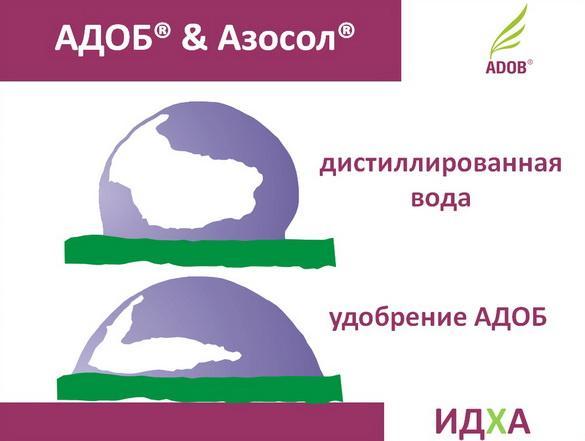 adob_rus_pr_11_1