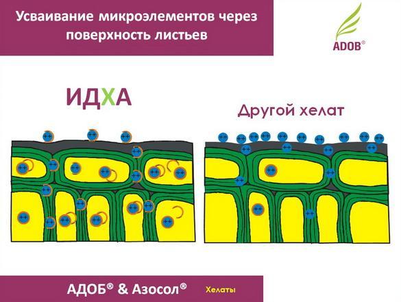adob_rus_pr_12_1