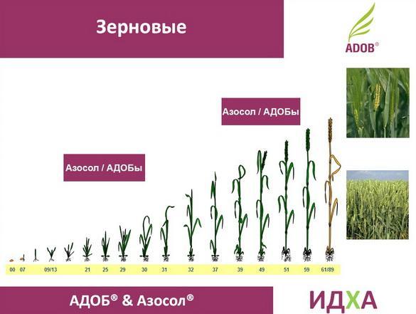 adob_rus_pr_13_1