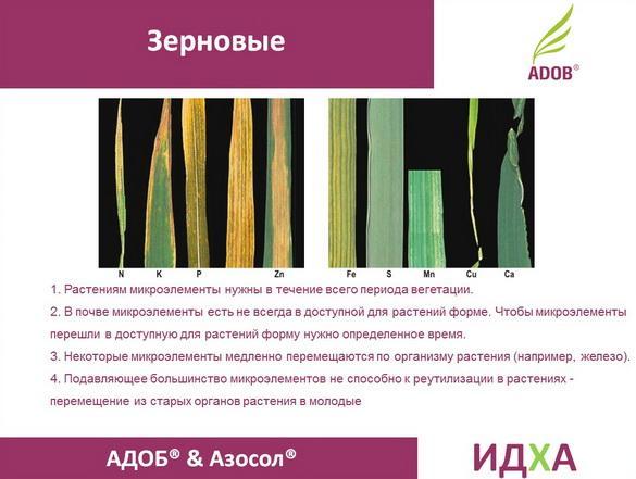 adob_rus_pr_14_1