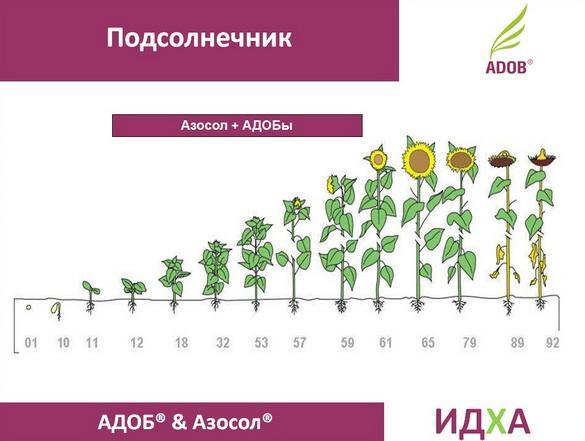 adob_rus_pr_15_1