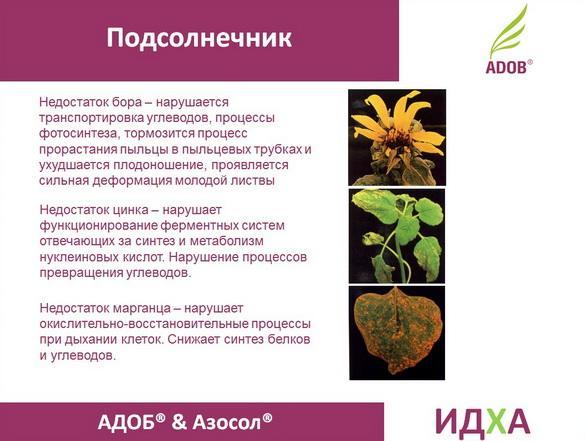 adob_rus_pr_16_1